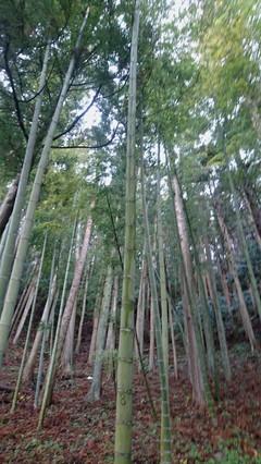 ミニ角松用の竹